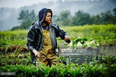Stock Photo : Farmer looking out across field while harvesting