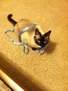 Our cat Bridget!
