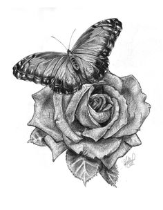 Butterfly with rose