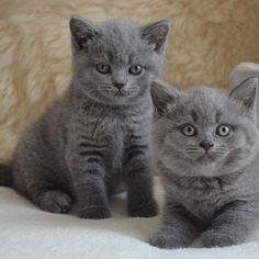 Wij zijn verliefd! #hartvoordieren #kittenlove #kitten