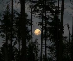 New nature photography moon lights Ideas Remus Lupin, Vanitas, Natt Wolf, Twilight, Laika Studios, Kubo And The Two Strings, Wicca, Magick, Estilo Grunge