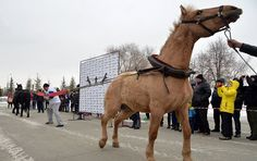 A Chelyabinsk strongman, Elbrus Nigmatullin, has performed a unique stunt of restraining two horses. The amazing 'horse pull' could be a new world record, RIA Novosti news agency reported.