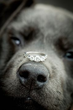<3 ring shot idea (Labrador´s snout) - Banff Engagement from Kim Payant Photography