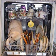 My dauchshund tries to do this too!  He has actually broken the dishwasher before!