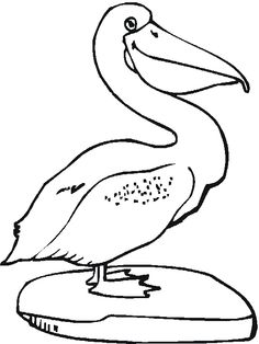 Pelicans Colouring Pages   Free Coloring Pages And Clip Art