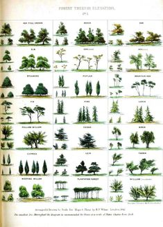 tree identification by leaf shape | graphic mapping handbook trees species educational plate tree shapes ...