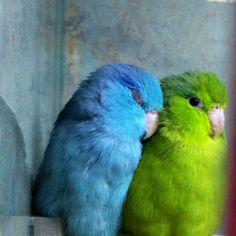Love... Bright colors. cute wall photo that matches my color scheme :)