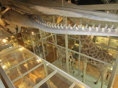 @HMNS @harvard museum of natural history