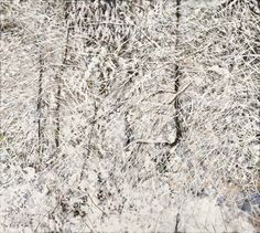 Cypress Snow 1 - My Special Art Prof from UBC - still a close friend at 93 and still painting superbly! List Of Artists, Local Artists, Mary Pratt, Anselm Kiefer, David Hockney, Photo Tree, Canadian Artists, Xmas Decorations, Abstract Landscape