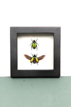 Caelorrhina semiviridis Butterflies, Insects, Frame, Nature, Home Decor, Picture Frame, Naturaleza, Decoration Home, Room Decor
