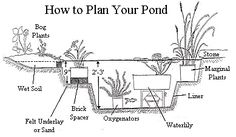 molded pond ideas | This is a line drawing of a cross section of a pond with depths ...
