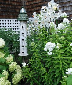 VIDEO: HOW DO I CARE FOR HYDRANGEA SHRUBS? Watch here: http://www.youtube.com/watch?v=ynUC4bIcI3g