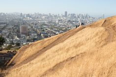 Yes, There Are Places to Hike in San Francisco - The Bold Italic - San Francisco