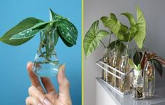 You can get tons of plants without spending a dime.We love houseplants. We love them so much that we want them vining all over our windows and filling every nook and cranny of our …