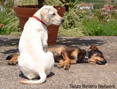 LUMIGNANO (VICENZA): SMARRITI DUE CANI, UNO BIANCO E UNO NERO FOCATO http://www.terzobinarionetwork.com/2015/10/lumignano-vicenza-smarriti-due-cani-uno.html