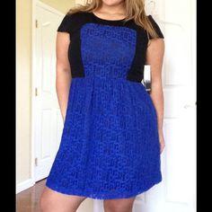 Blue/Black Lace Skater Dress Bright blue with black accents this dress pops! Kensie Dresses