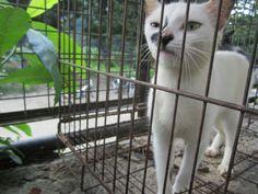 OurCat2 Panther, Cats, Animals, Gatos, Animais, Animales, Animaux, Animal, Kitty