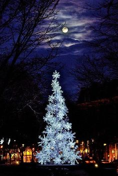 Christmas time is the best Christmas Alone, Christmas Scenes, Magical Christmas, Merry Little Christmas, Noel Christmas, Outdoor Christmas, Beautiful Christmas, Winter Christmas, Blue Christmas Lights
