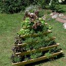 cool plantepyramide