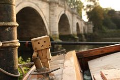 Ahoy. A Danbo photo by Anita Russell