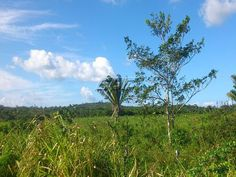 Farm land Belize for Sale