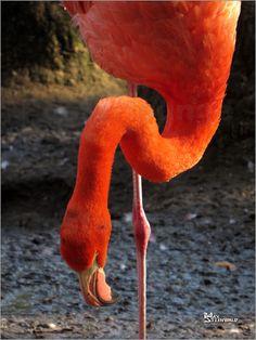 Flamingo Art 4 Bilder: Poster von Max Steinwald bei Posterlounge.de
