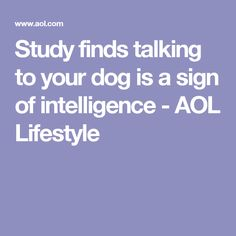 Study finds talking to your dog is a sign of intelligence - AOL Lifestyle