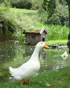 ♡ the duck and his house!