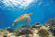 marine life is very important for us in st.maarten