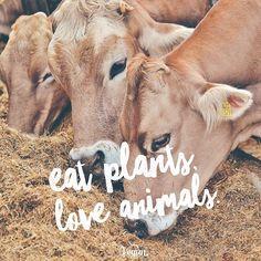 eat plants #love animals #vegan