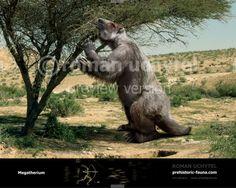 Displaying Megatherium-2013-738x591.jpg