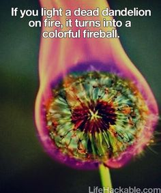 dead dandelion + fire = rainbow fireball of coolness