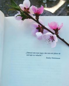 Tea And Books, Artist Quotes, Feelings And Emotions, Emily Dickinson, Insta Posts, Heart Quotes, Spiritual Quotes, Deep Thoughts, Beautiful Words