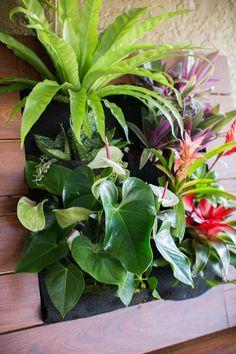 Vertikaler Garten mit exotischen und trophischen Pflanzenarten