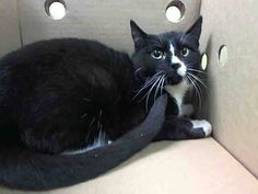 BABY PULLED BY FELINE RESCUE OF STATEN ISLAND❤️ - TO BE DESTROYED 3/30/15 *NYC* ADORABLE KITTEN! * Brooklyn Center * At the time of intake cats were calm. When handled became agitated, nervous, scared. My name is BOBO. My Animal ID # is A1030963. I am a female black and white dom sh mix. 6 MONTHS old. STRAY on 03/21/2015