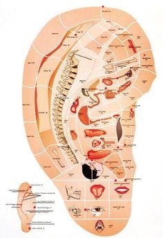 La Auriculoterapia es una rama de la Medicina Tradicional China que consiste en colocar Balines, Tachuelas y semillas para estimular diversas áreas de tu cuerpo y así ayudarlo a estar en equilibrio. Lo cual, entre muchos otros padecimientos, puede ayudarte a bajar de peso. - See more at: http://www.conacupuntura.com/#sthash.2xjB73Nf.dpuf