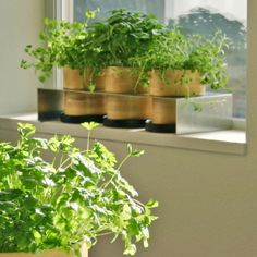 freshen up your cooking… growing your own herbs | inspired habitat
