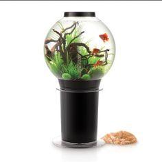 Biorb 105 Aquarium
