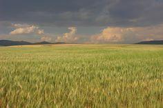 idaho wheat feilds | Panoramio - Photo of Idaho wheat field. Storm clouds