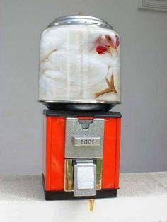 the ultimate egg dispenser! fresh eggs, funni stuff, funni anim, funni shit, ultim egg, egg dispens, anim liber