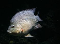 How to raise talapia in your backyard.  A great step towards self-sufficiency.