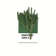 Pantone 2265 color match. Leaves from some type of Creeping Juniper.