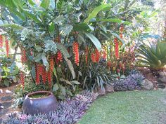 Hundscheidt Tropical Gardens 2008-01-25 by bruce.morrison, via Flickr