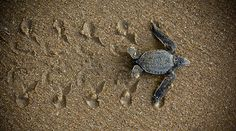 Protect sea turtles!