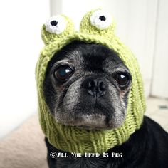 Dog Hat - Frog Hat by jessicalynneart on Etsy, $24.00