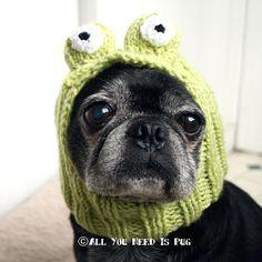 Adorable dog hats!