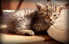 WELLSOFT Kitty Kitty, Cats, Animals, Little Kitty, Gatos, Animales, Animaux, Kitty Cats, Animal