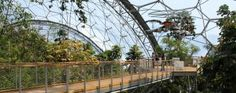 The Eden Project is a unique wedding venue - you can hold your event overlooking or in a rainforest or mediterranean biome