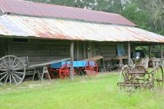 Travel west on Newberry Road, and you will be transported 150 years back in time at Dudley Farm, where you can see how farming in North Florida has evolved! #