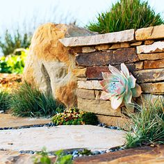 Succulent as garden wall art